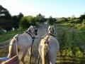 Heste (10).jpg