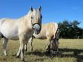 Heste (11).jpg