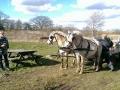 Heste (13).jpg