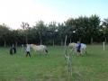 Heste (14).jpg