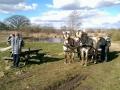Heste (8).jpg