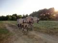 Heste (9).jpg