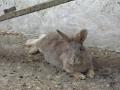 Kaniner (1).jpg